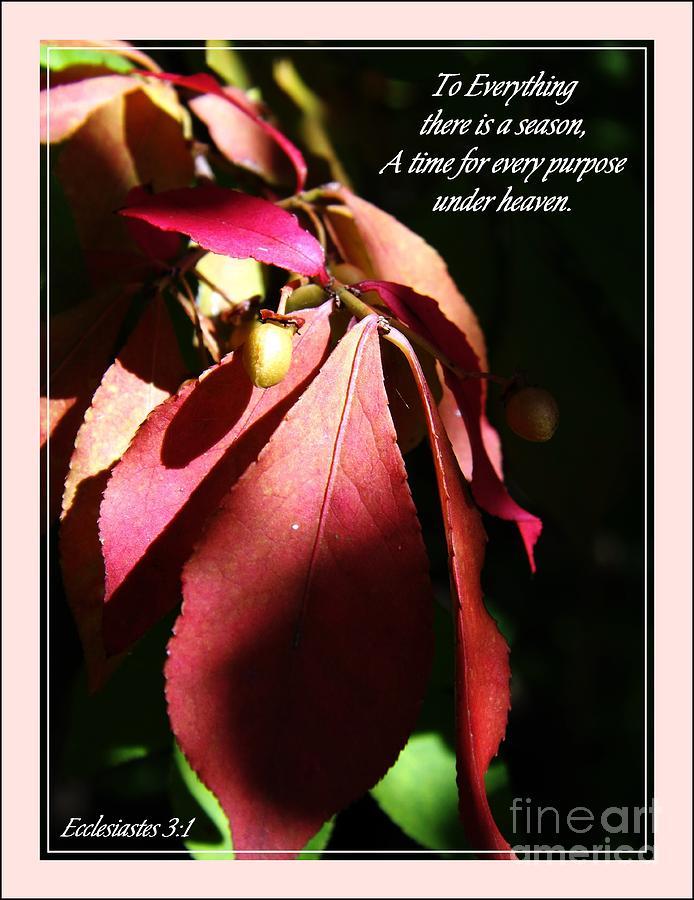 Red Photograph - Ecclesiastes 3 Verse 1 by Sara  Raber