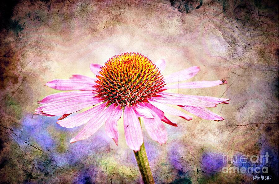 Echinacea Coneflower Photograph