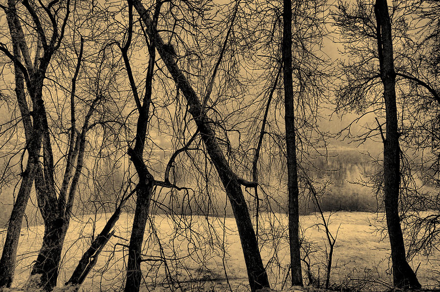 Edge Of Winter Photograph  - Edge Of Winter Fine Art Print