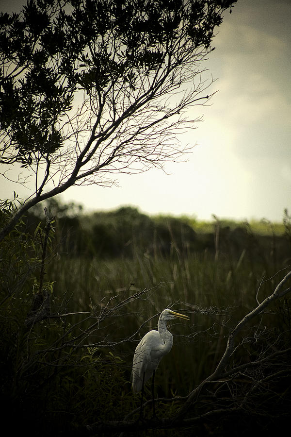 Egret At Sunset Photograph