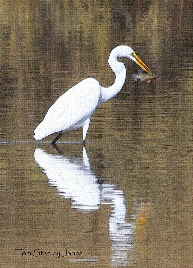 Egret Eats Fish Photograph