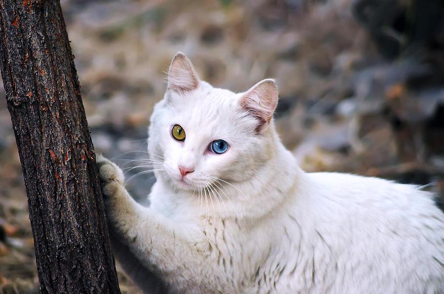 El Gato Photograph