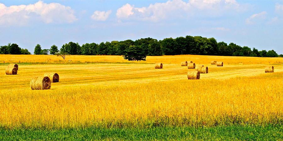 Farm Photograph - Eldorado by Frozen in Time Fine Art Photography