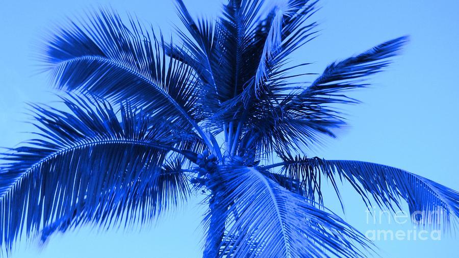 trees palm blue - photo #13