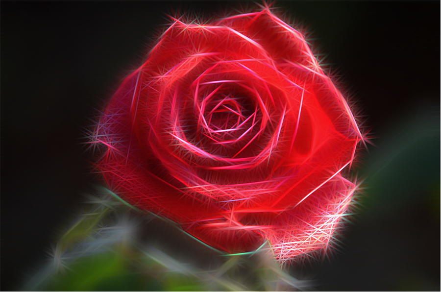 Electric Rose Photograph  - Electric Rose Fine Art Print