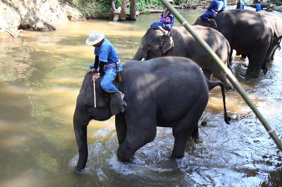 Chiang Photograph - Elephant Baths - Maesa Elephant Camp - Chiang Mai Thailand - 01131 by DC Photographer