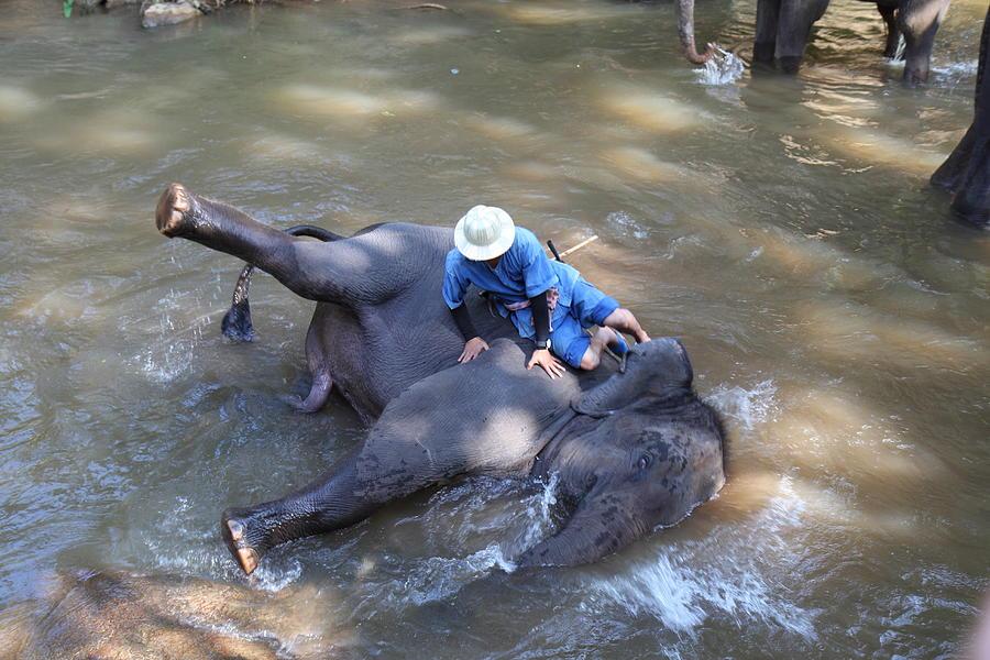 Chiang Photograph - Elephant Baths - Maesa Elephant Camp - Chiang Mai Thailand - 011310 by DC Photographer