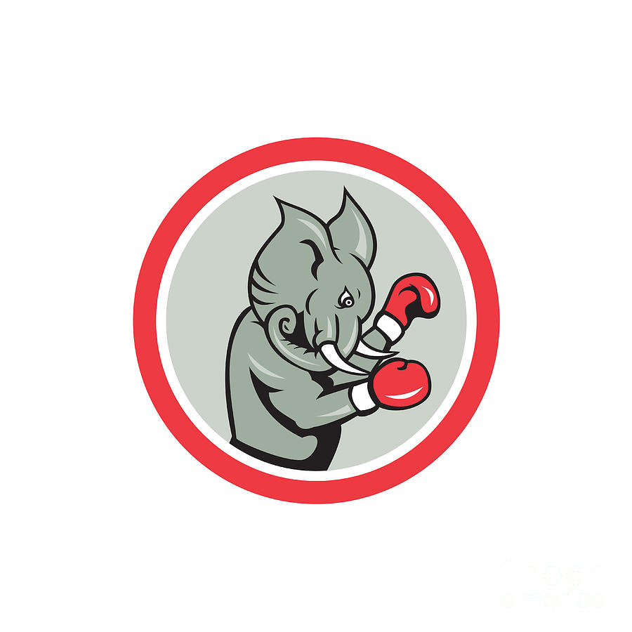 Elephant Boxer Boxing Circle Cartoon Digital Art