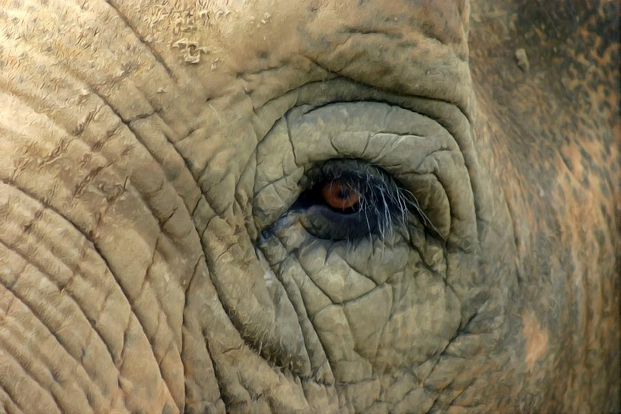 Elephant Eye is a painting by Lanjee Chee which was uploaded on March ...