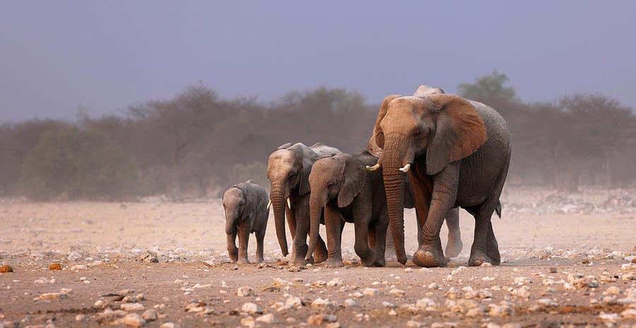 Wild Photograph - Elephant Herd by Johan Swanepoel