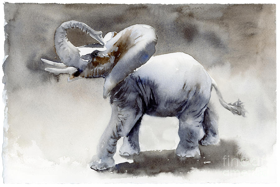 Elephant Light Study  Painting