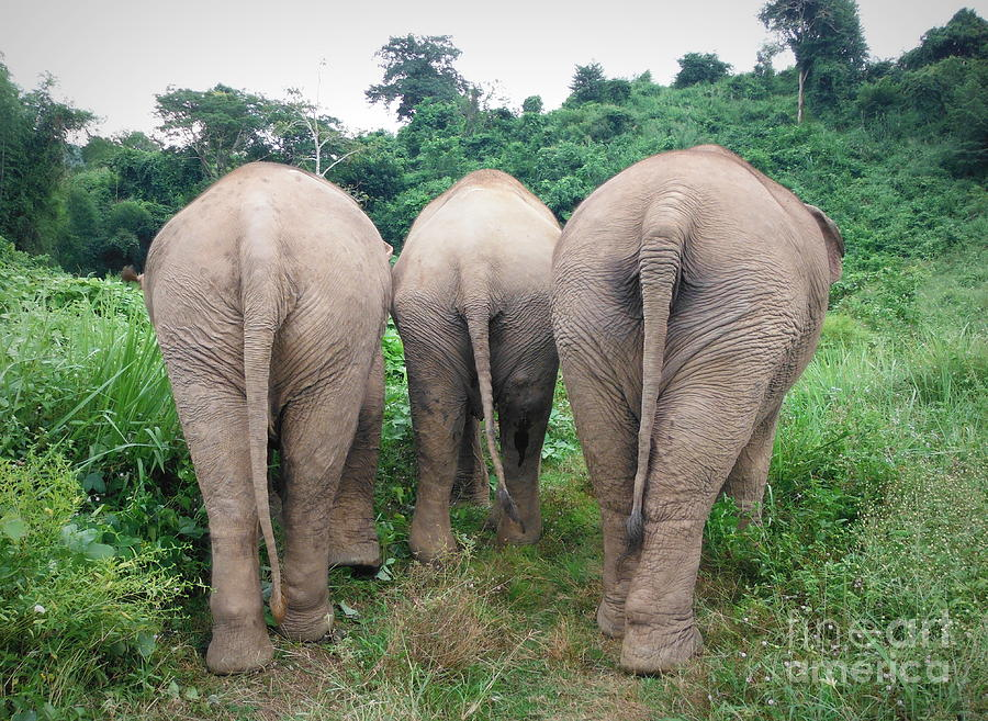 Related Keywords Amp Suggestions For Elephant Tails