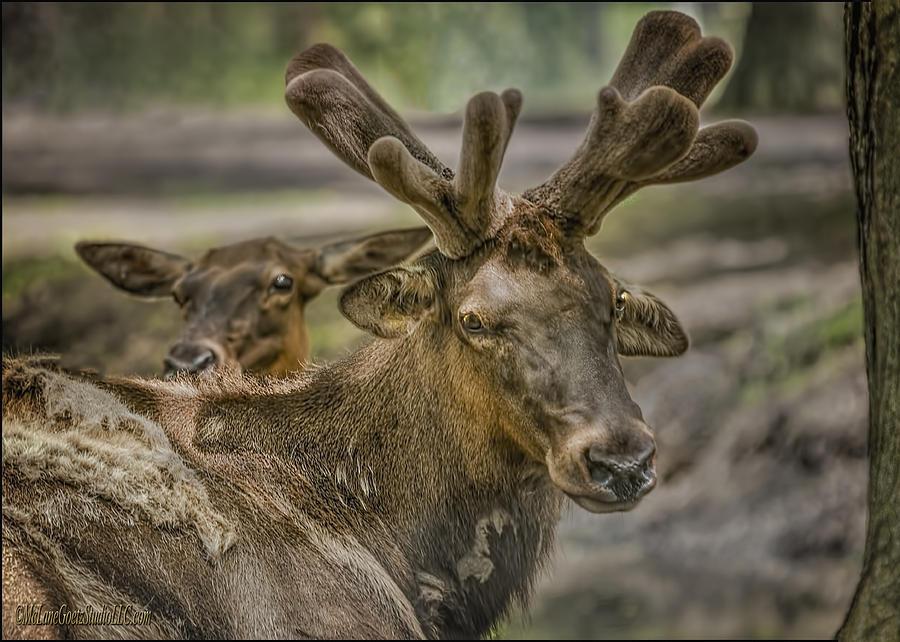 Elk 577 Second Llc Elk Private Time Photo...