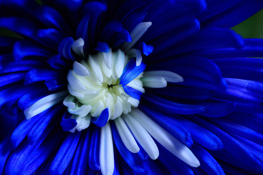 Embraced In Blue Photograph  - Embraced In Blue Fine Art Print