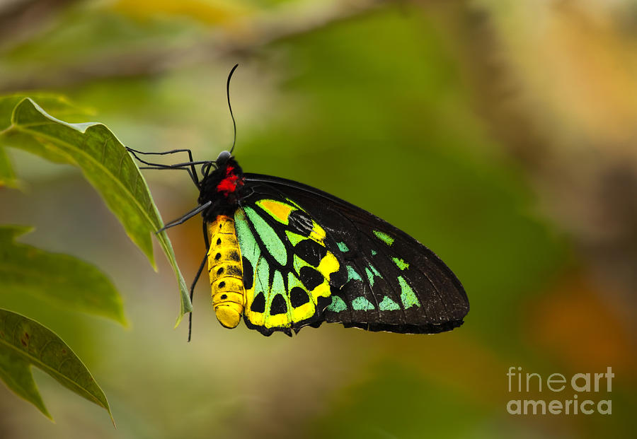 Emerald Beauty Photograph  - Emerald Beauty Fine Art Print
