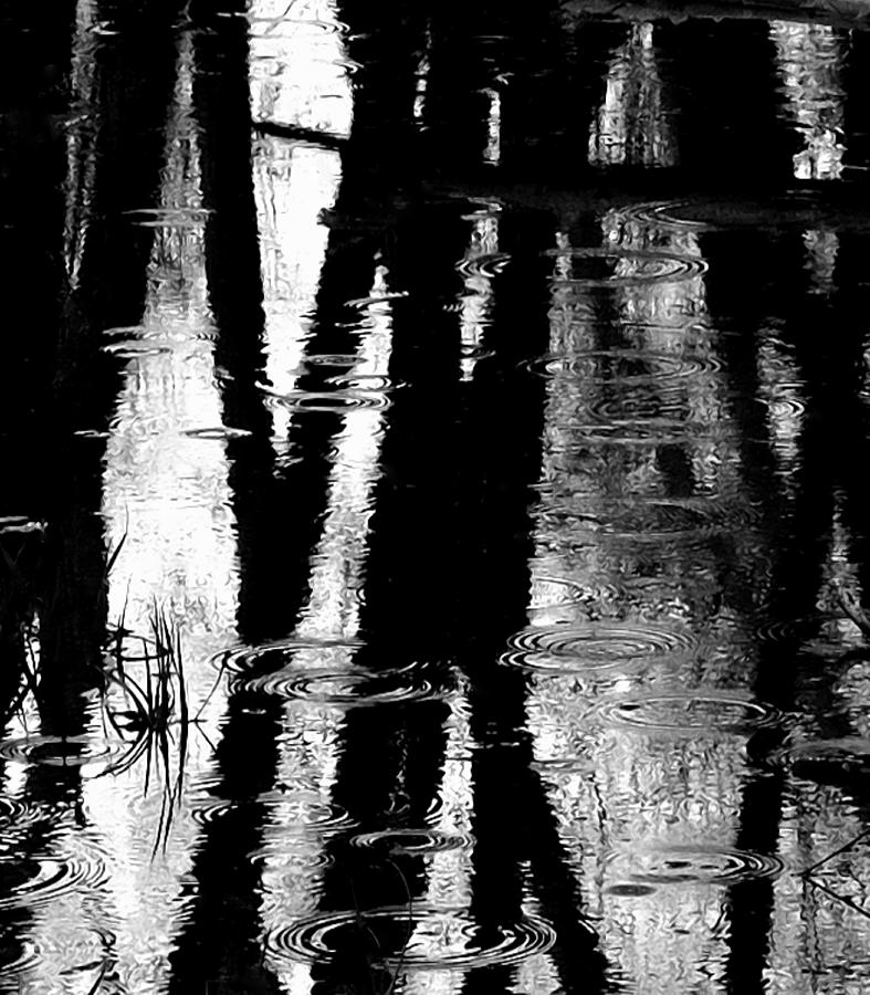 Blacks Photograph - Emotional Crossing - Natures Tear Drops by Steven Milner