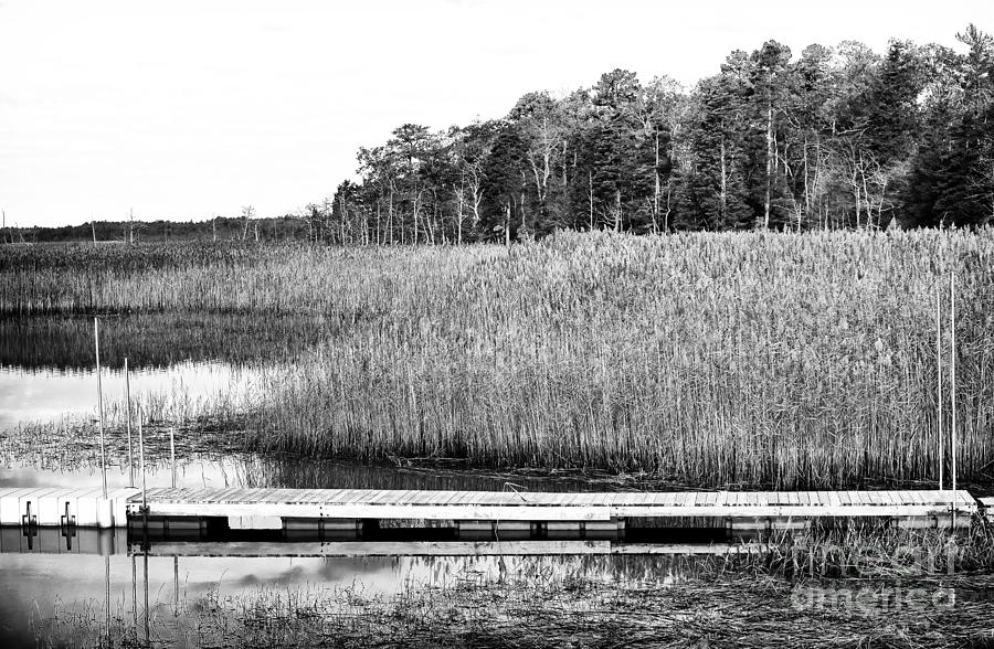 Empty Pine Barrens Photograph