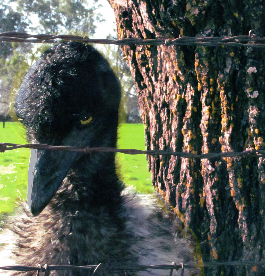 Emu Digital Art - Emu Next To Tree by Marcia Cary
