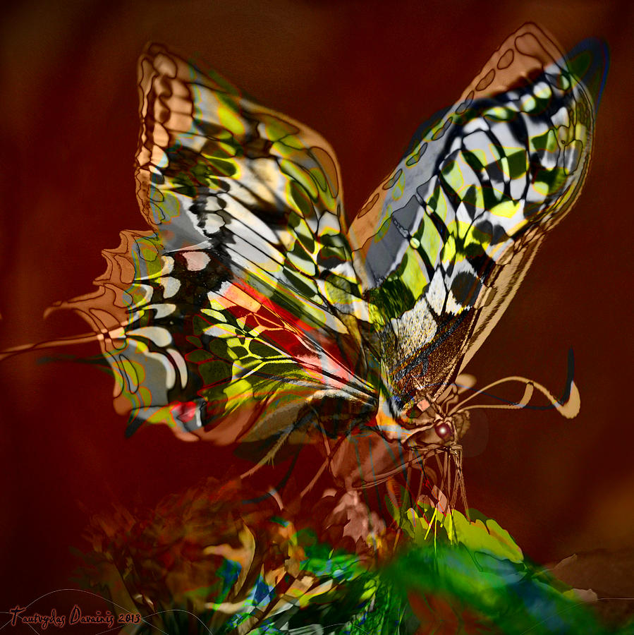 Enchanted Butterfly. First.  Photograph