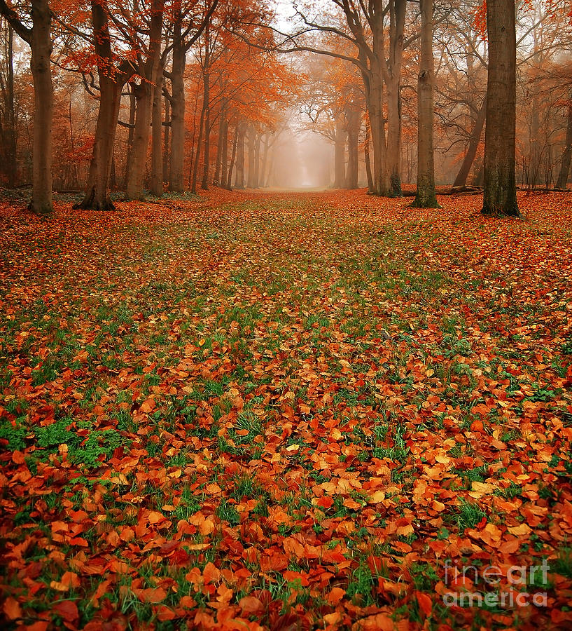 Endless Autumn Photograph  - Endless Autumn Fine Art Print