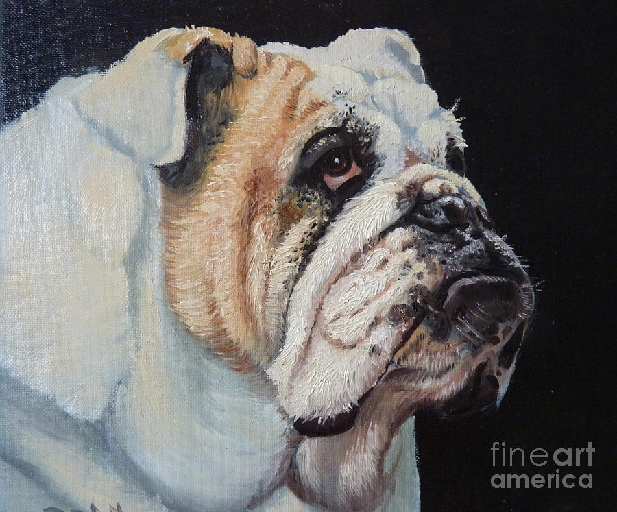 English Bulldog Painting by Bill Dean