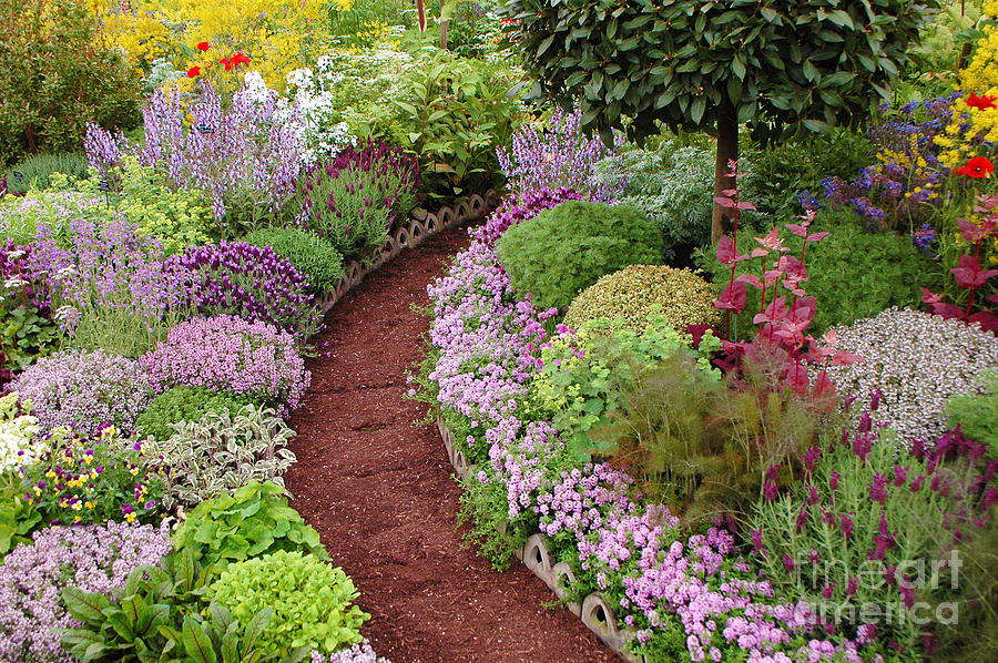 English Garden Path Photograph By Mike Nellums