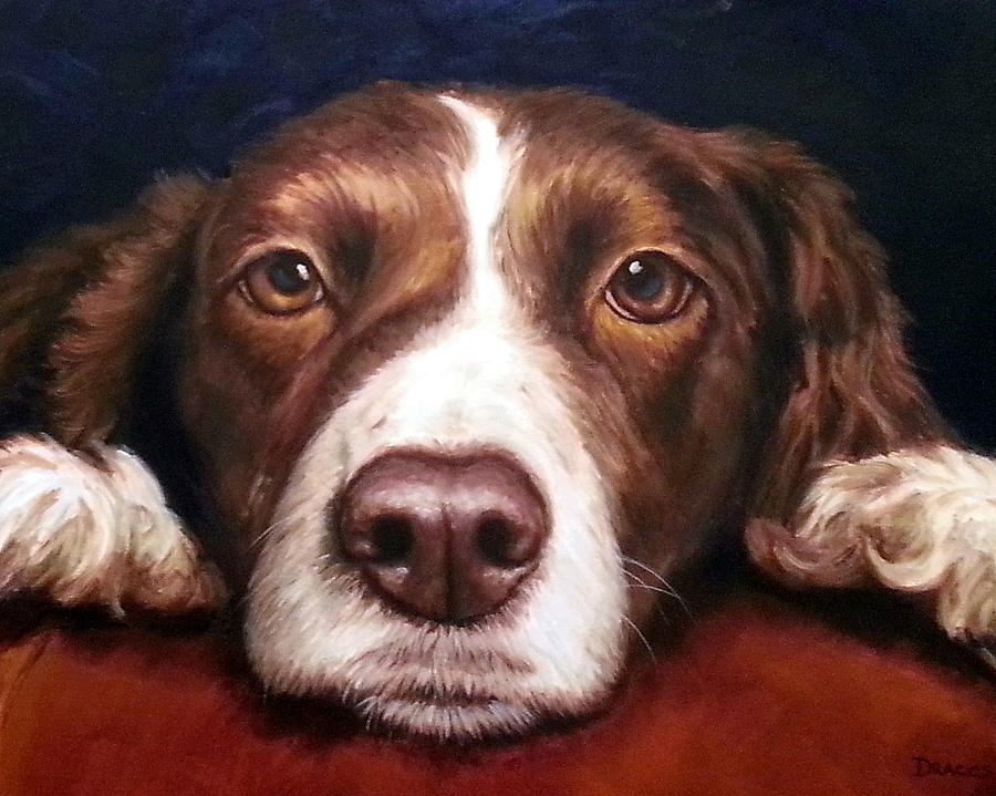 English Springer Spaniel Resting On Dark Red Painting  - English Springer Spaniel Resting On Dark Red Fine Art Print