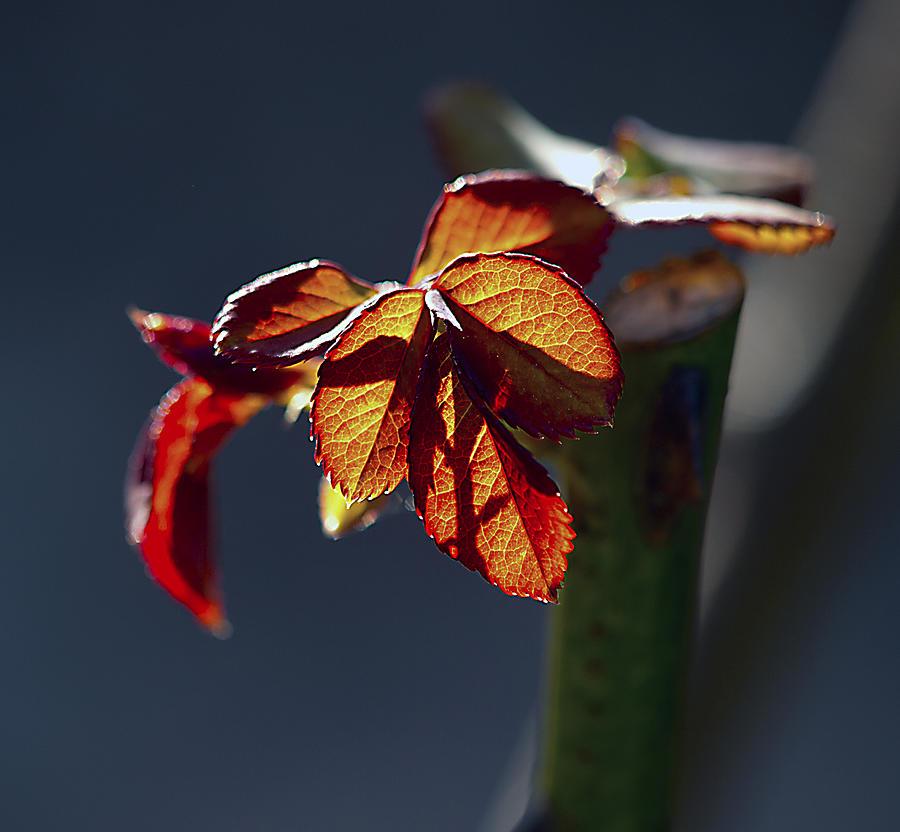 Spring Photograph - Eternal by Joe Schofield