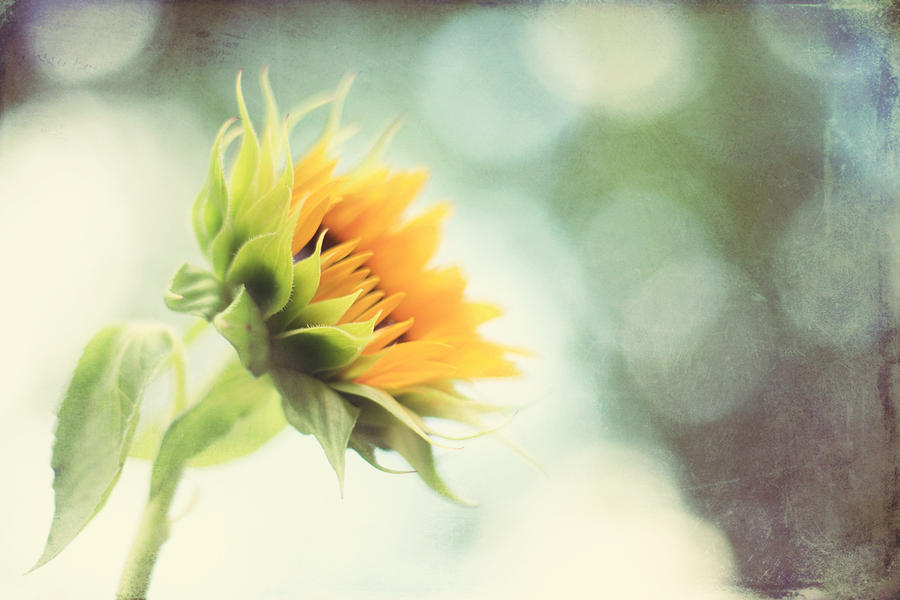 Sunflower Photograph - Eternal Optimist by Amy Tyler