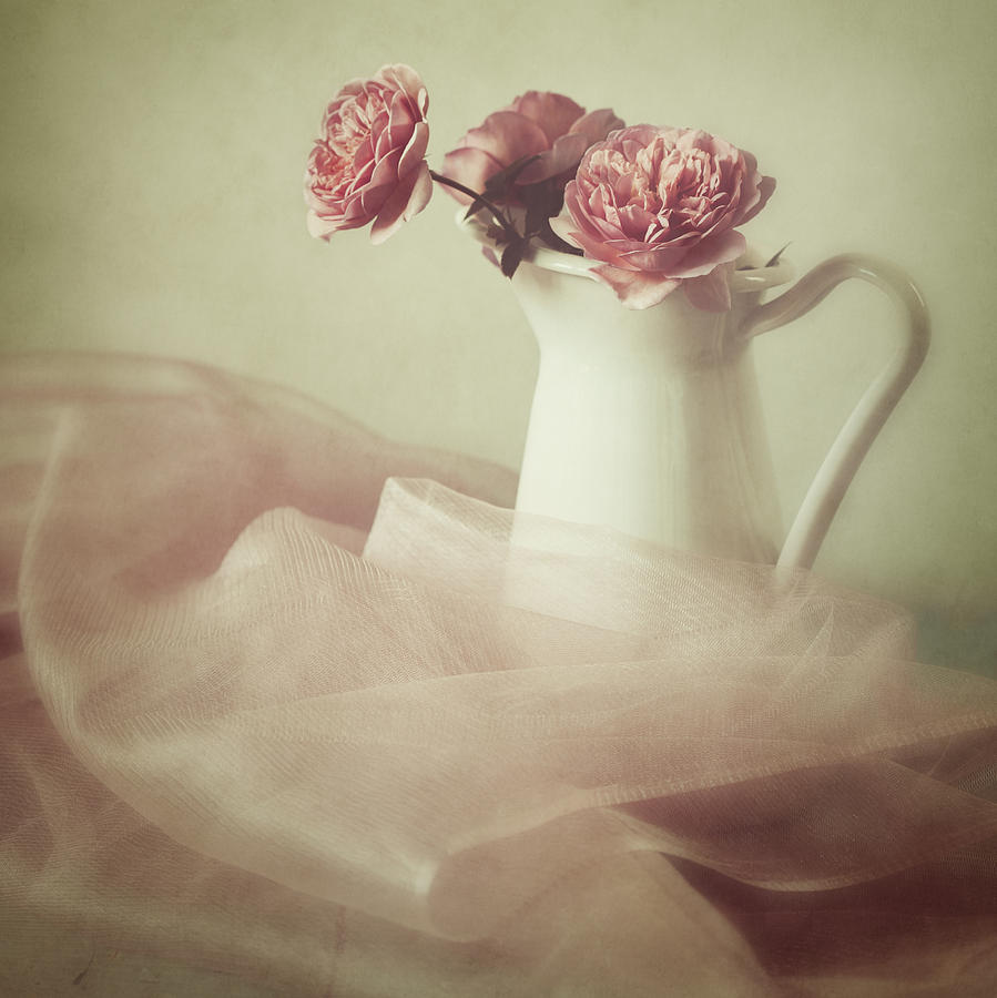 Rose Photograph - Ethereal by Amy Weiss