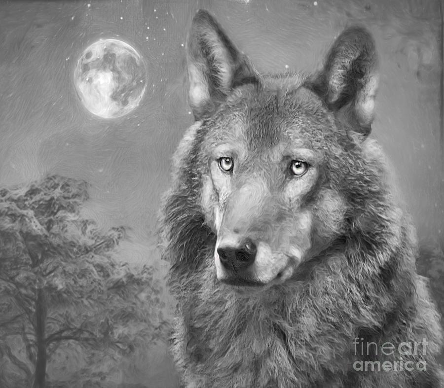 European Wolf Photograph