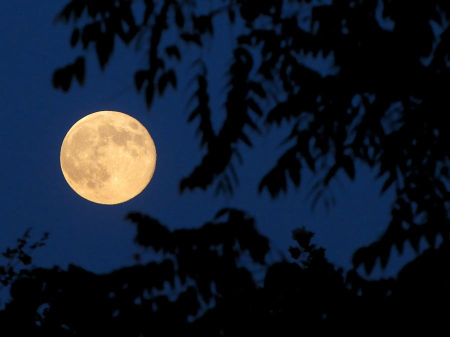 Evening Full Moon Photograph