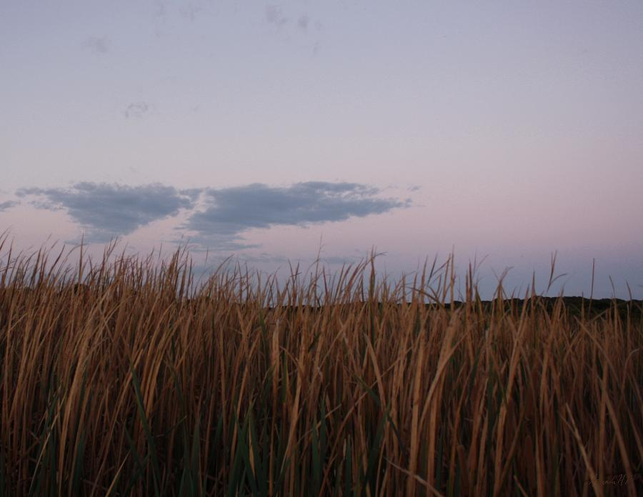 Rushes Photograph - Evening Rushes by Amanda Holmes Tzafrir