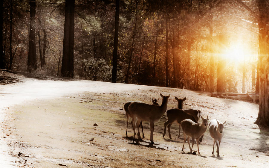 Deer Photograph - Evening Social  by Kim Henderson