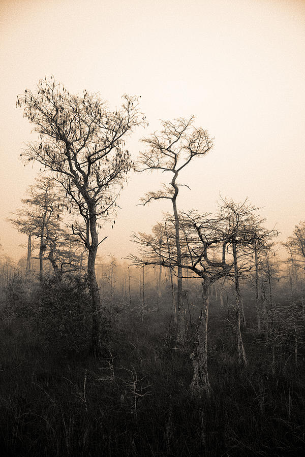 Everglades Cypress Stand Photograph