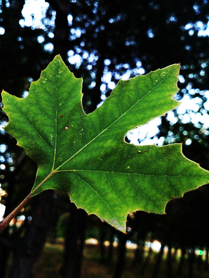 Leaf Photograph - Every Story Has A Beginning... by Lucy D