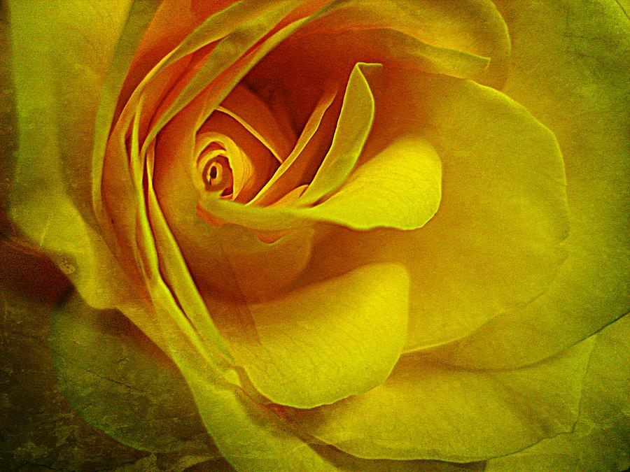 Eye Of Rose Photograph  - Eye Of Rose Fine Art Print