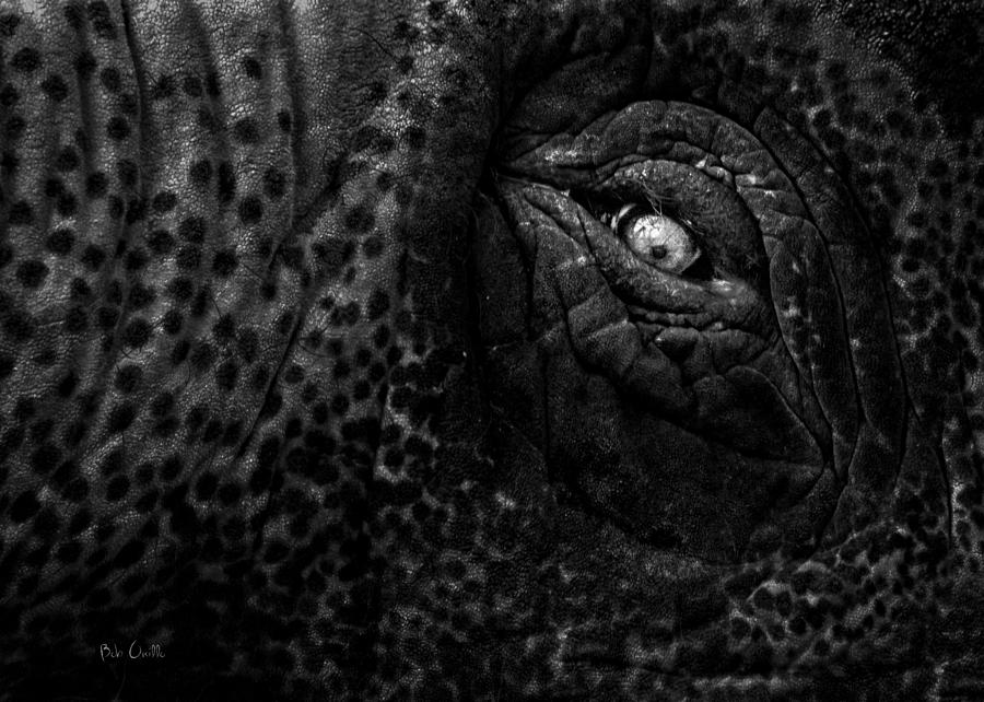 Eye Of The Elephant Photograph
