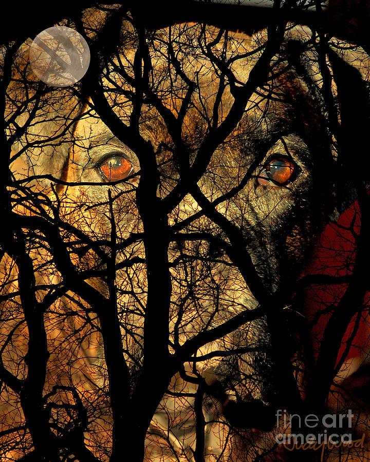 Dog Digital Art - Eyes In The Sky by Judy Wood