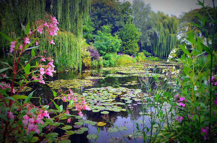 Fairy Tale Pond With Water Lilies And Willow Trees
