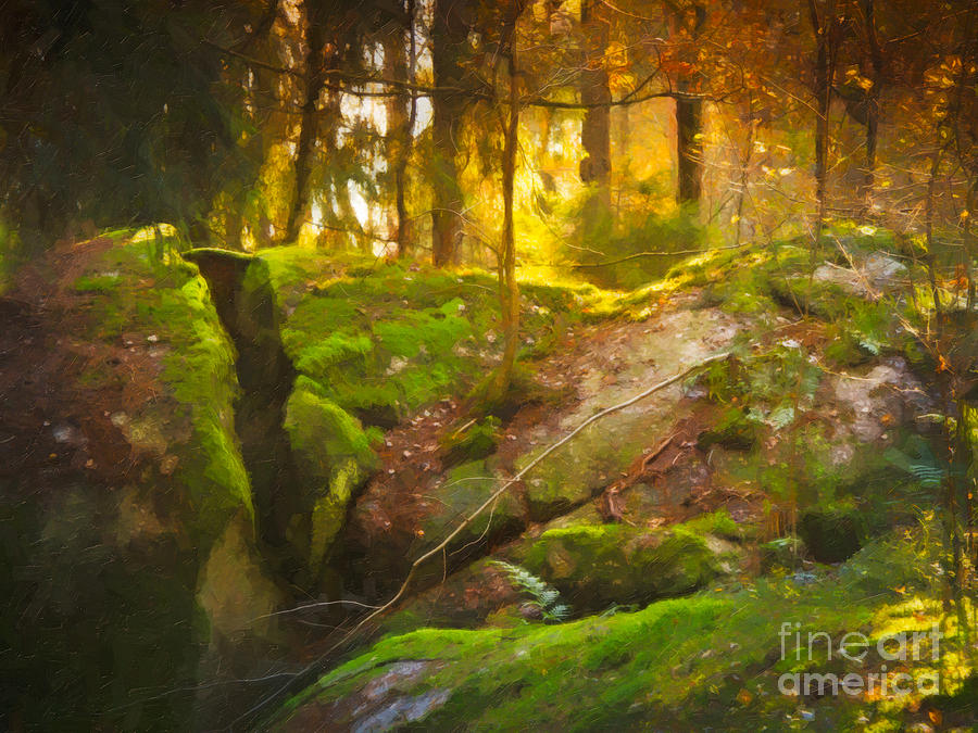 Fairytale Forest Photograph