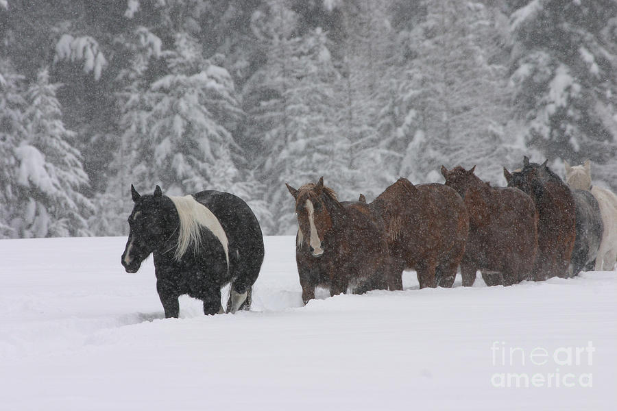 Horses Photograph - Faith Will Bring You Home by Diane Bohna