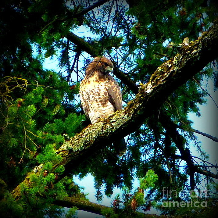 Falcon High Photograph  - Falcon High Fine Art Print