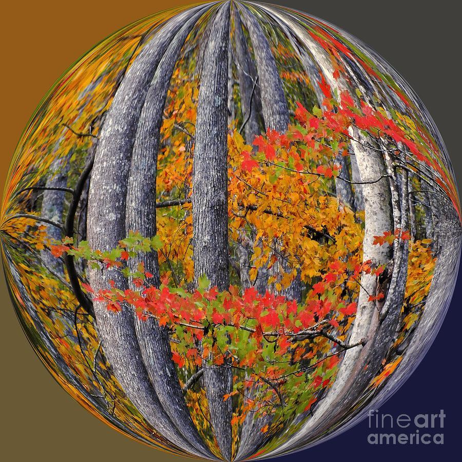Autumn Leaves Photograph - Fall Art Nouveau by Scott Cameron