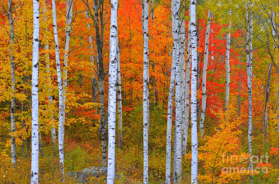 Fall At Its Best Photograph  - Fall At Its Best Fine Art Print