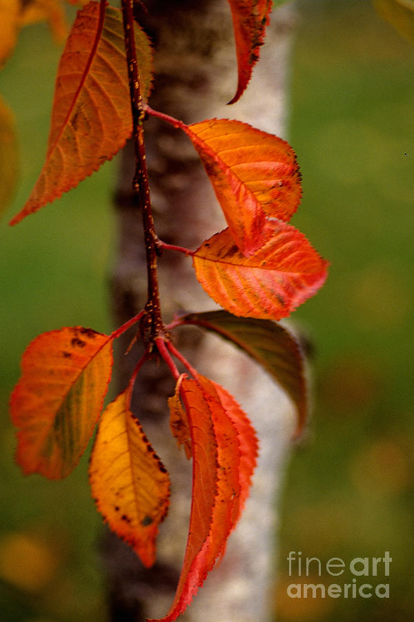 Fall Beauty Photograph
