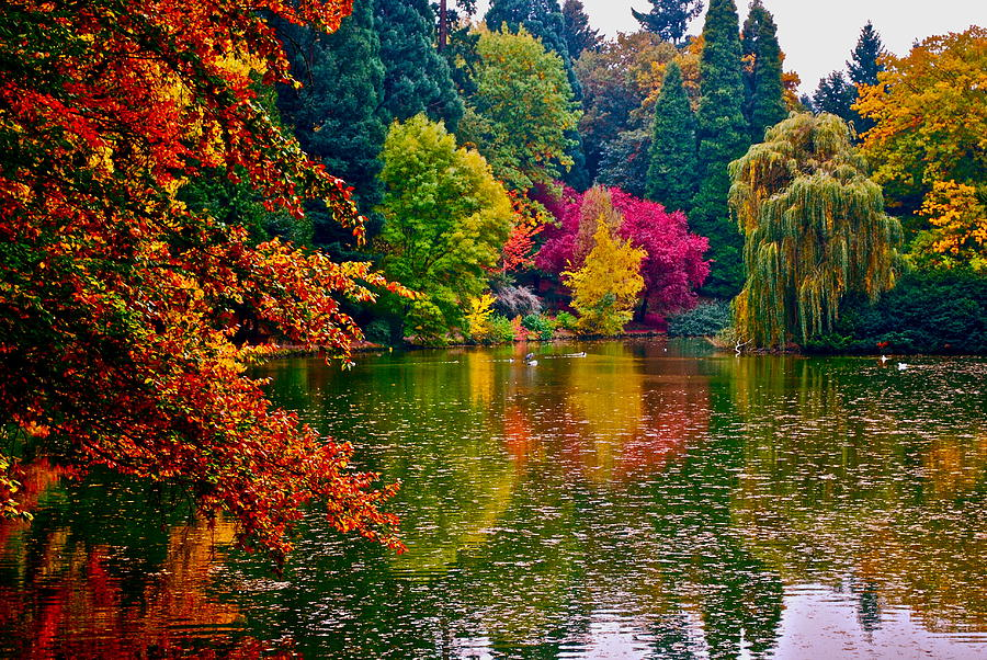 Landscape Photograph - Fall By The Water by Rae Berge