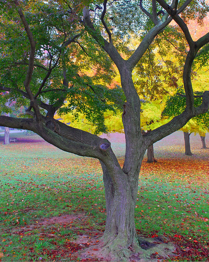 Fall Color Photograph  - Fall Color Fine Art Print