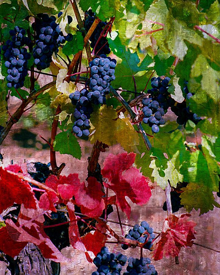 Wine Grapes Digital Art - Fall Delight I by Ken Evans