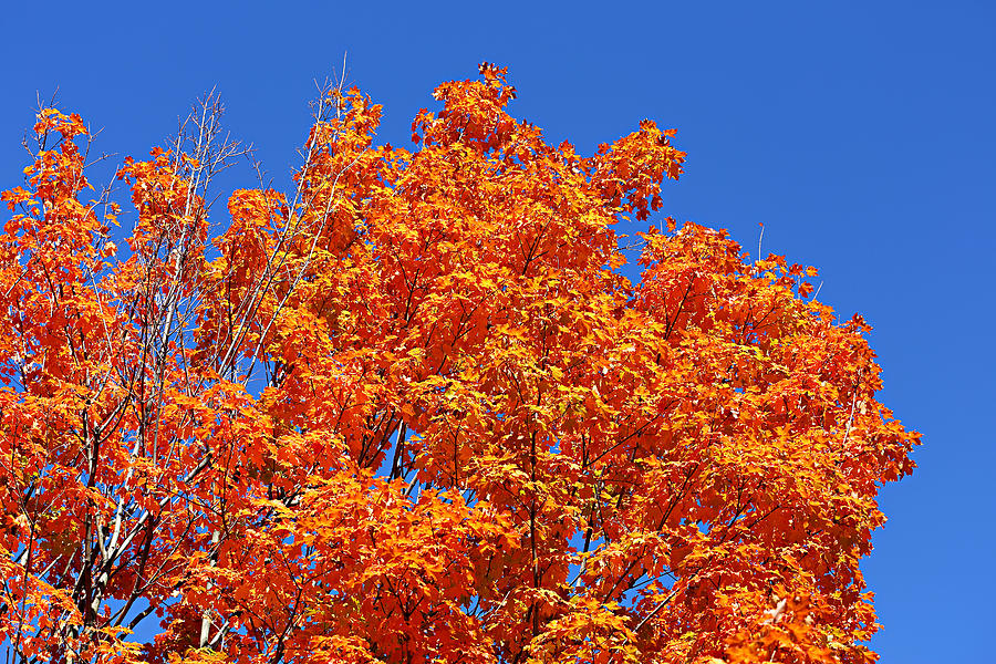 Autumn Photograph - Fall Foliage Colors 19 by Metro DC Photography